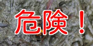 スズメバチへの対処法を知っておこう