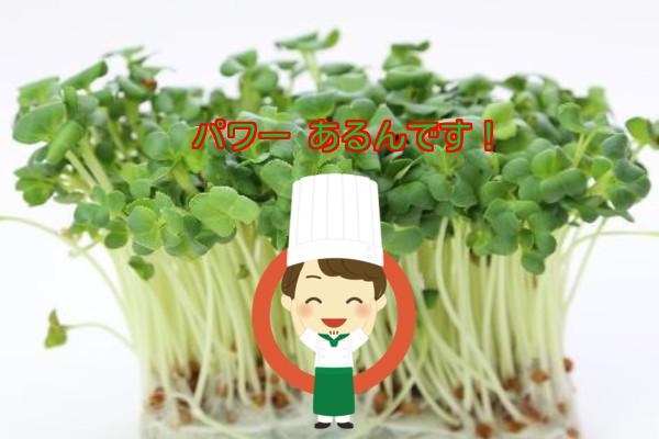 研究結果  奇跡の野菜 スプラウト!!!