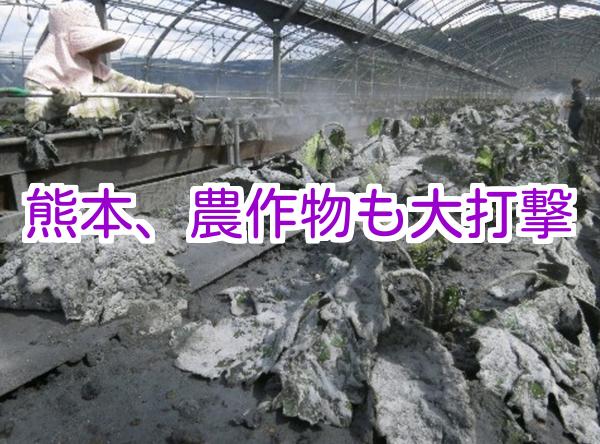 熊本噴火で農作物にも影響