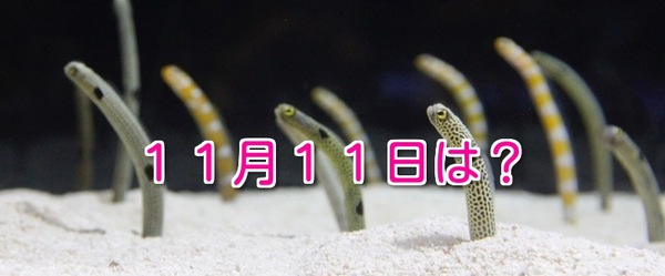 11月11日は〇〇の日