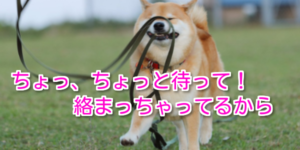 日本一?いや、たぶん世界一有名な柴犬 『まるたろう』