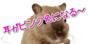 ポジティブなネズミって知ってた?