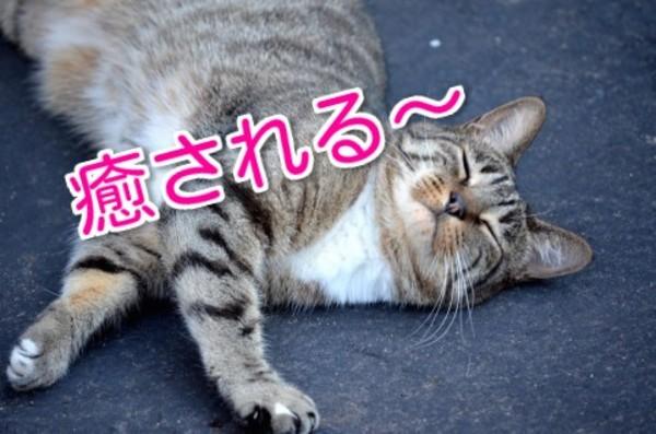 猫のいる暮らし