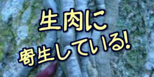 【危険】生肉を食べるとどうなる?