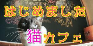 猫カフェはじめました