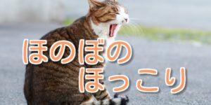 ネコがいる暮らしって、どう?