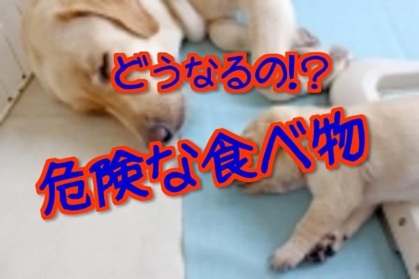 【危険】犬が食べたらどうなる?
