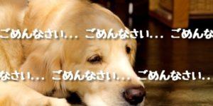 飼い犬が乳児を噛んで・・・なぜ?防げる?
