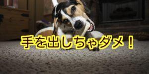 犬の噛みつき事故が多いのはなぜ?