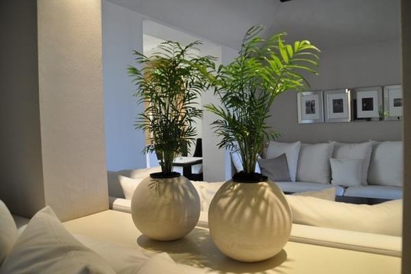 運気アップのお部屋の作り方、運気別に植物の力も借りちゃおう!