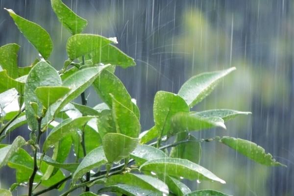 ジメジメした季節に起こる「気象病」貴方は大丈夫?