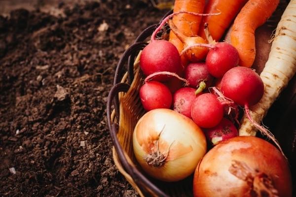 野菜の皮 捨てないで!栄養が沢山入っている皮の栄養も頂いちゃいましょう!