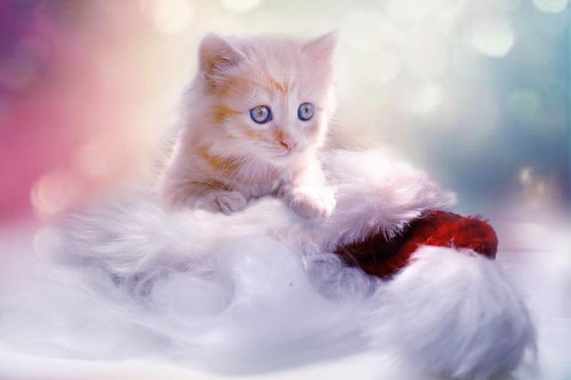 猫好きの男性と恋がしたい!猫好き男性の特徴とは?